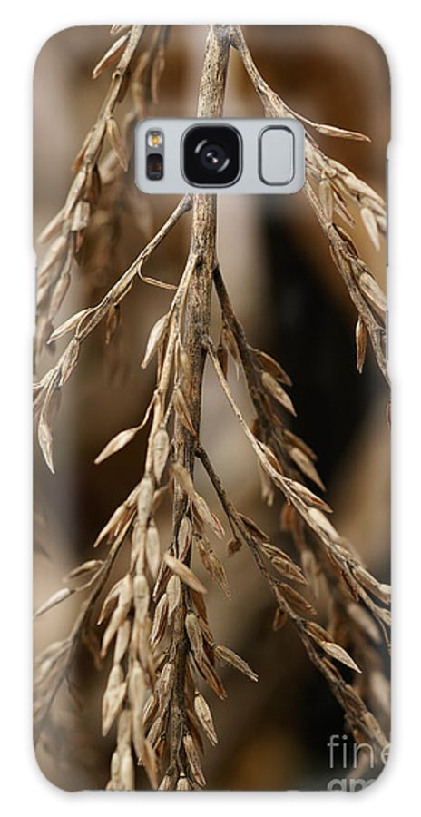 Corn Galaxy S8 Case featuring the photograph After The Harvest - 1 by Linda Shafer