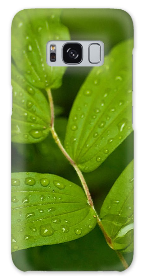 Closeup Galaxy S8 Case featuring the photograph After The Rainfall by R J Ruppenthal
