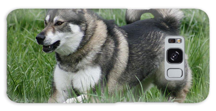 Dog Galaxy S8 Case featuring the photograph Alaskan Malamute 2 by David Dunham