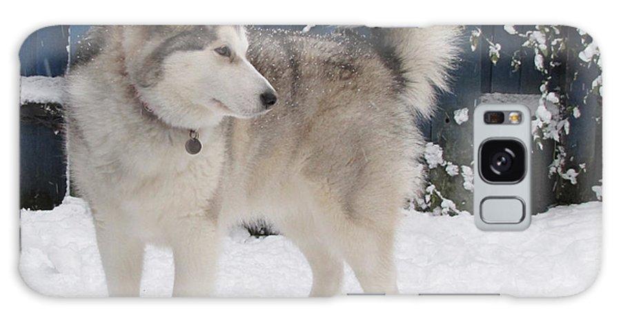 Dog Galaxy S8 Case featuring the digital art Alaskan Malamute In Snow 2 by Roy Scorer