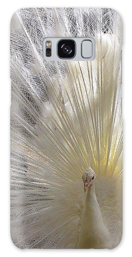 Peacocks Galaxy S8 Case featuring the photograph A Leucistic Peacock by Lori Pessin Lafargue