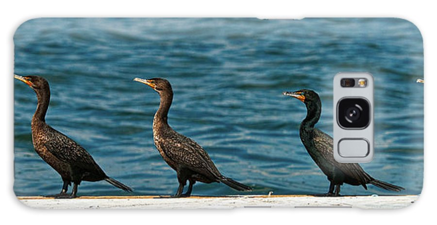 Cormorant Galaxy S8 Case featuring the photograph All In A Row by Christopher Holmes