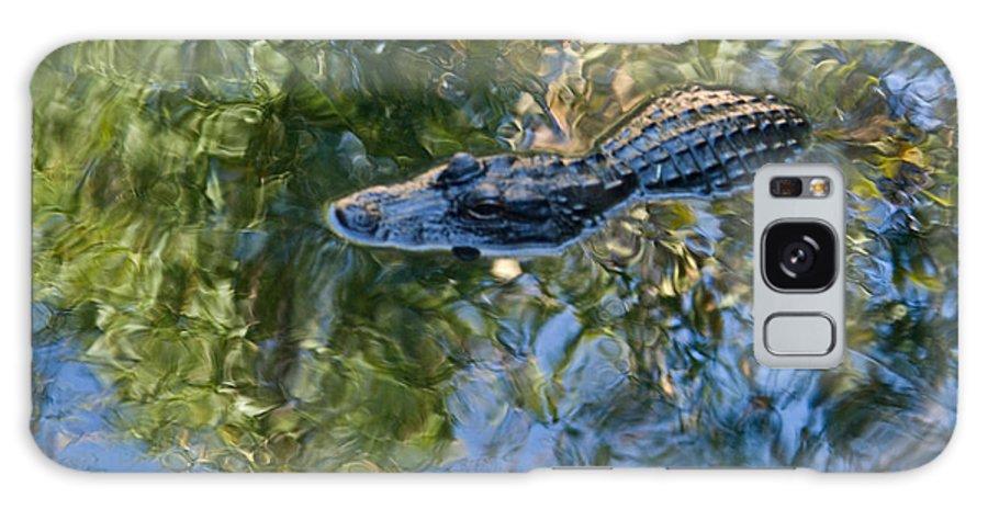 Alligator Galaxy Case featuring the photograph Alligator Stalking by Douglas Barnett