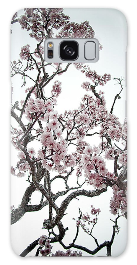 Almond Tree In Flower Galaxy S8 Case featuring the photograph Almond Tree In Flower by Nelson Mineiro