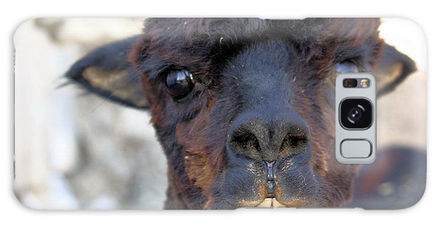 Alpaca Galaxy S8 Case featuring the photograph Alpaca 3 by Denise Jenks