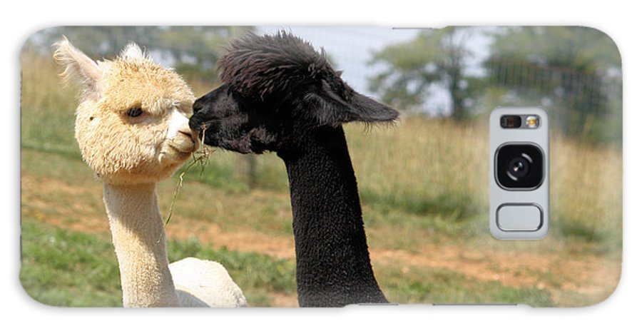 Kiss Galaxy S8 Case featuring the photograph Alpaca Kiss by Denise Jenks