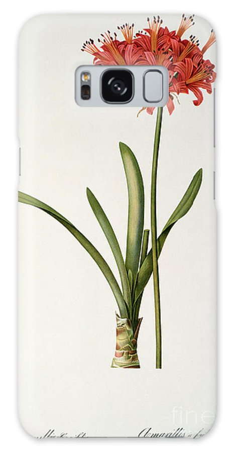 Amaryllis Galaxy S8 Case featuring the drawing Amaryllis Curvifolia by Pierre Redoute