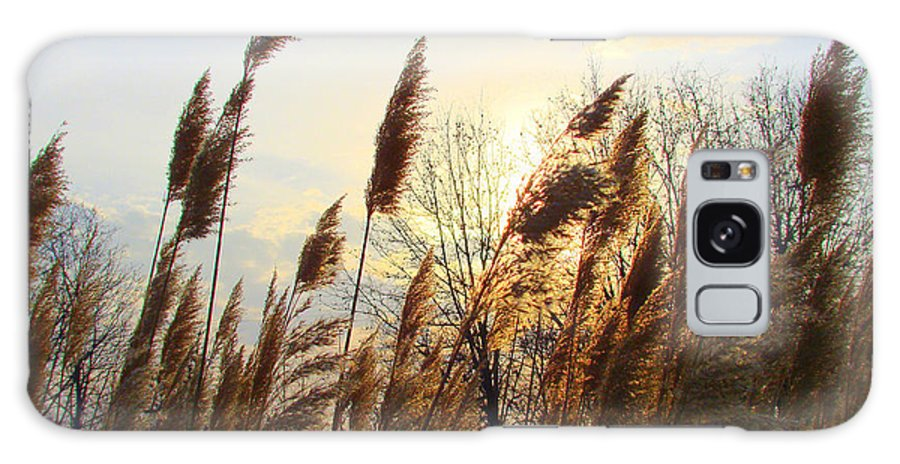 Pampasgrass Galaxy S8 Case featuring the photograph Amber Waves Of Pampas Grass by J R Seymour