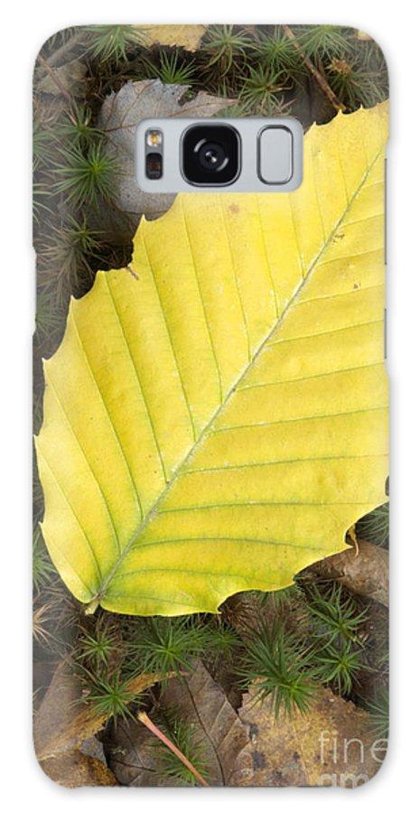 Autumn Galaxy Case featuring the photograph American Beech Leaf by Erin Paul Donovan
