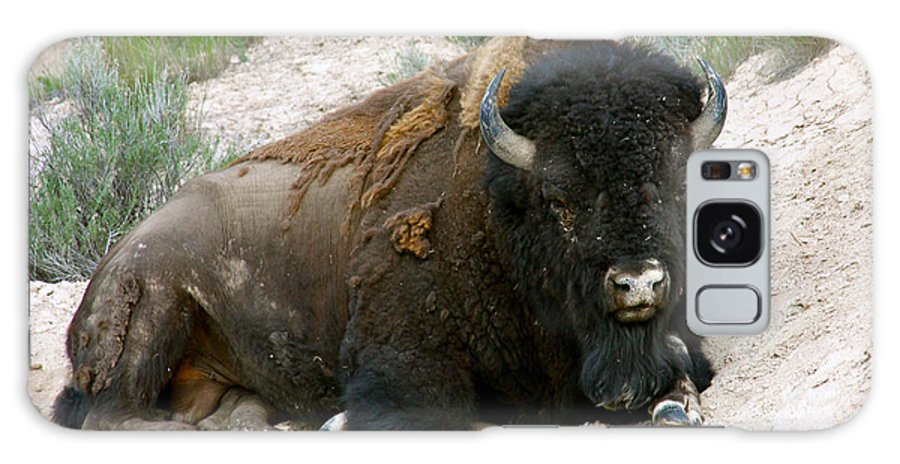 America Galaxy S8 Case featuring the photograph American Bison by Karon Melillo DeVega