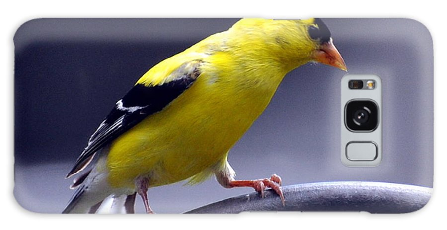 Bird Galaxy S8 Case featuring the photograph American Goldfinch by Glenn Gordon