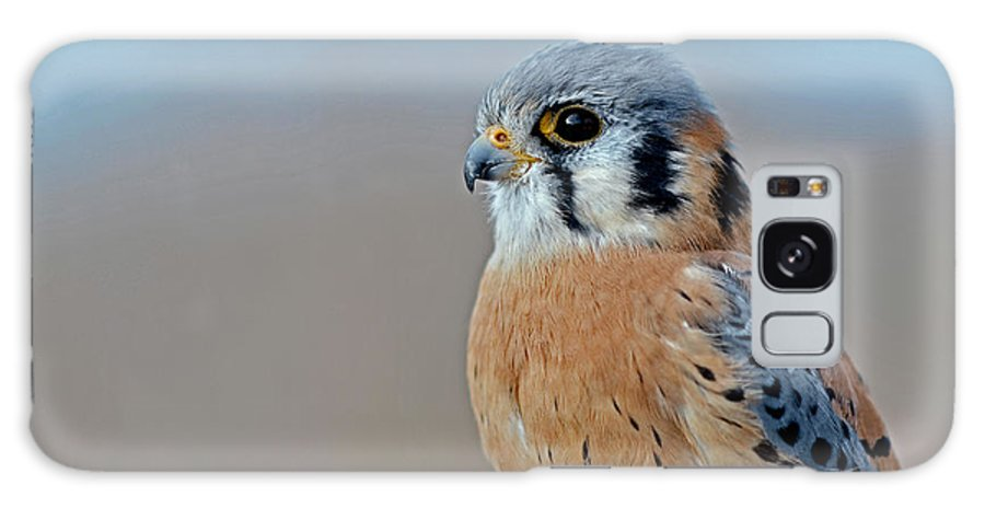 American Kestrel Profile Galaxy S8 Case for Sale by Asbed ...