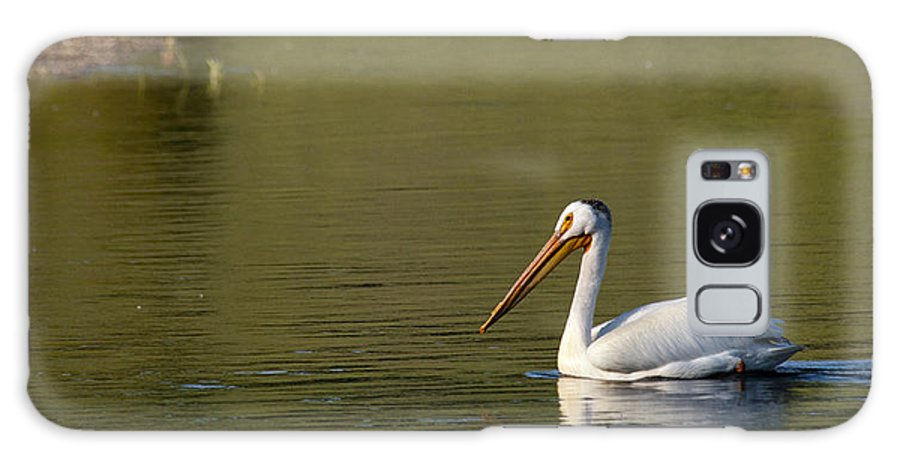 Pelican Galaxy S8 Case featuring the photograph American White Pelican by Chad Davis