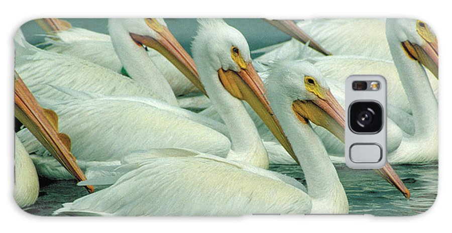 White Pelicans Galaxy S8 Case featuring the photograph American White Pelicans by Bruce Morrison