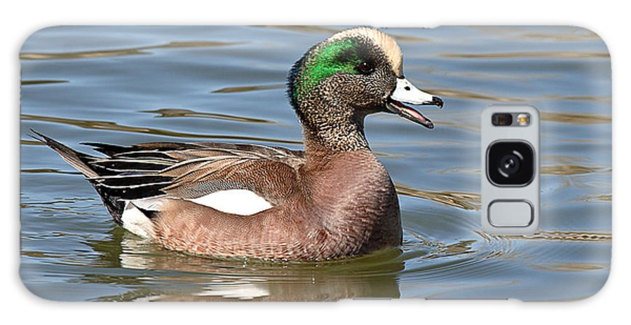 Widgeon Galaxy S8 Case featuring the photograph American Widgeon Calling From The Water by Max Allen