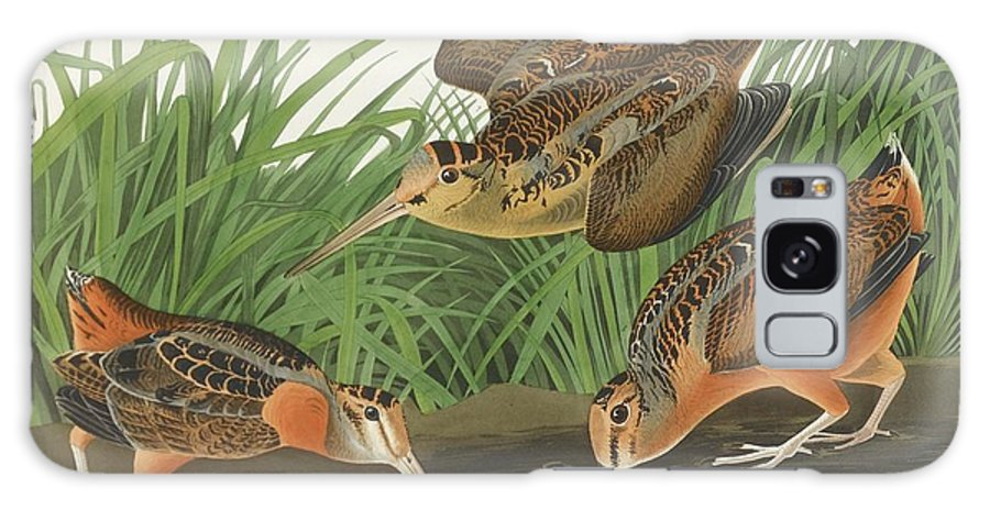 John James Audubon (after) American Woodcock (plate Cclxviii) Galaxy S8 Case featuring the painting American Woodcock by MotionAge Designs