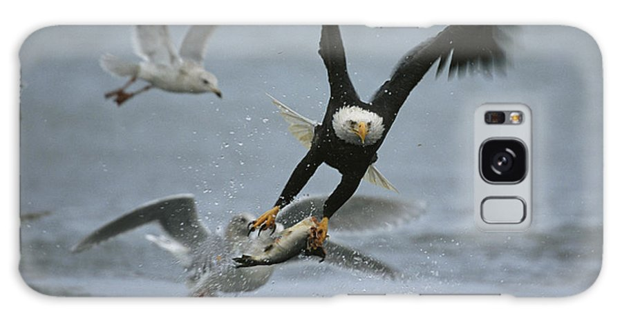 Animals Galaxy S8 Case featuring the photograph An American Bald Eagle Grabs A Fish by Klaus Nigge