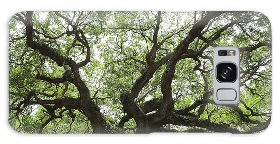 Angel Oak Galaxy S8 Case featuring the photograph Angel Oak Branches by Carol Groenen