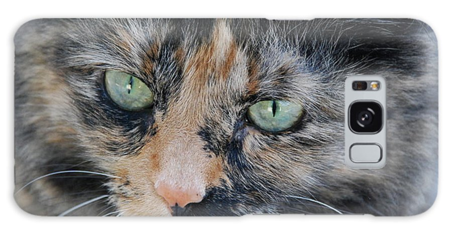 Cat Galaxy S8 Case featuring the photograph Angela by Michael L Gentile
