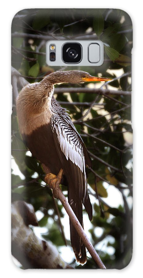 Anhinga Galaxy S8 Case featuring the photograph Anhinga Water Fowl by Joseph G Holland