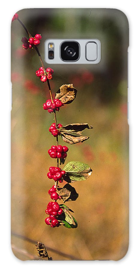 Fall Colors Galaxy S8 Case featuring the photograph Another Year by Randy Oberg