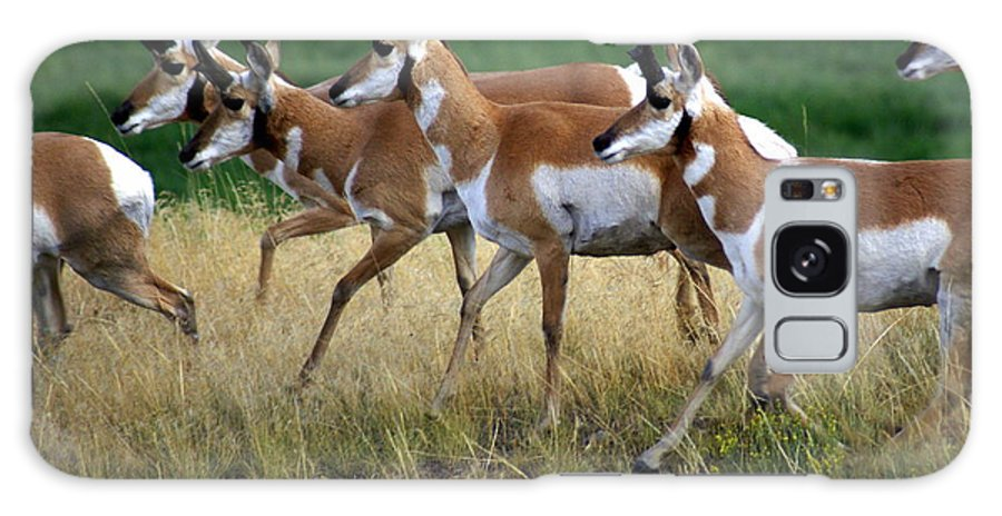 Wildlife Galaxy S8 Case featuring the photograph Antelope 1 by Marty Koch