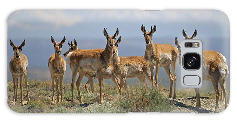 Antelope Galaxy Case featuring the photograph Antelope by Heather Coen