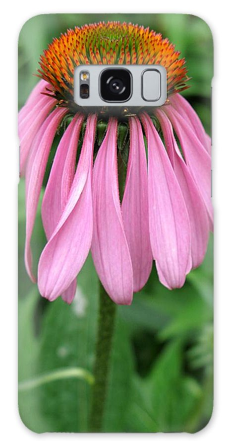 Cone Flower Galaxy S8 Case featuring the photograph Apology Accepted by Carol Sweetwood