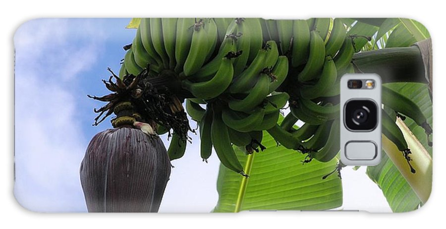 Green Galaxy S8 Case featuring the photograph Apple Bananas by Mary Deal