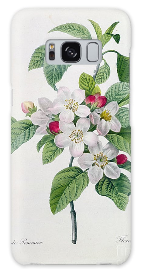 Apple Galaxy S8 Case featuring the painting Apple Blossom by Pierre Joseph Redoute
