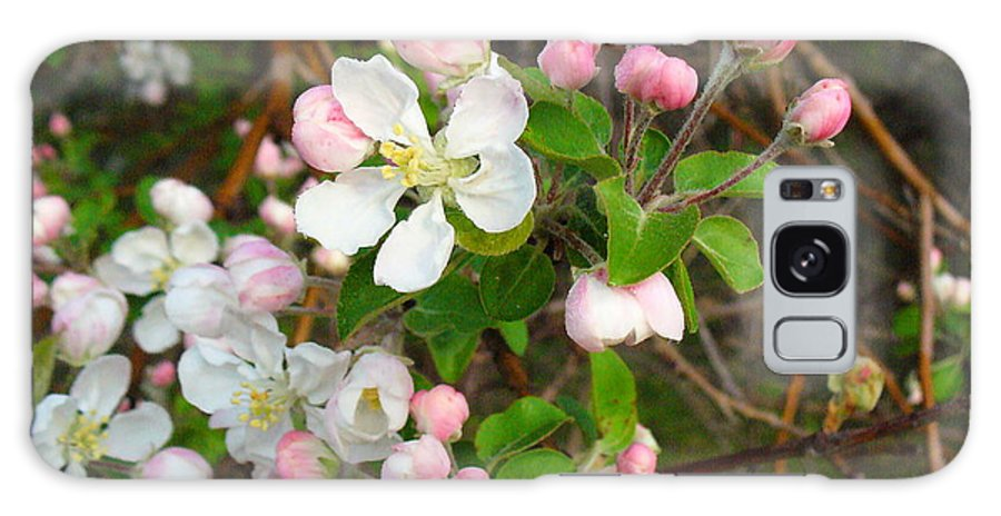 Blossoms Galaxy Case featuring the photograph Apple Blossom Pink by Peggy King