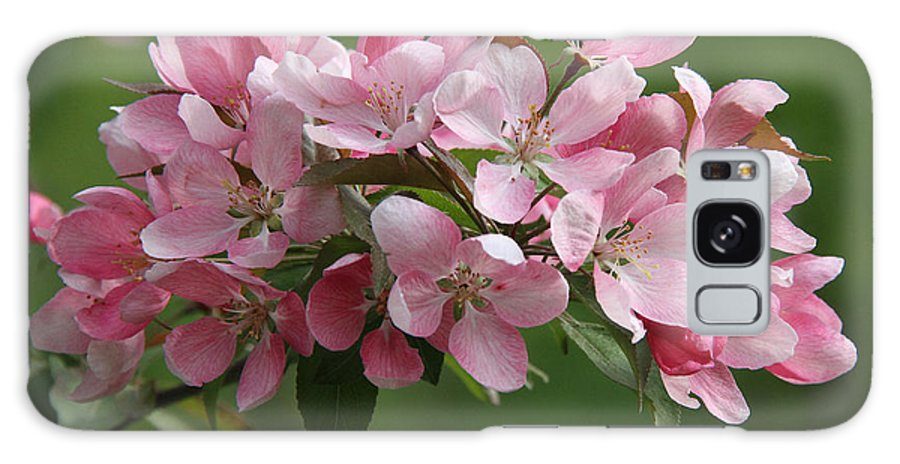 Apple Blossoms Galaxy S8 Case featuring the photograph Apple Blossoms by Doris Potter