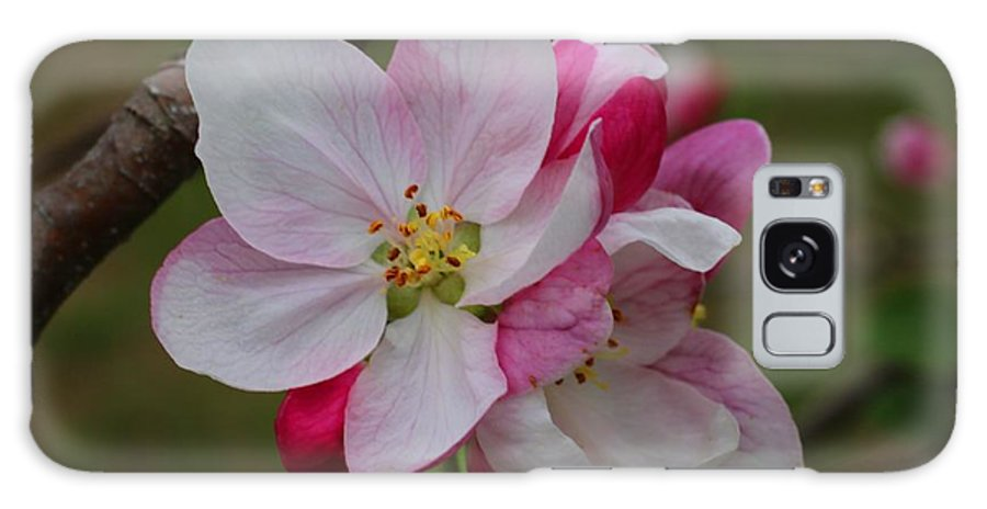 Apple Blossoms Galaxy S8 Case featuring the photograph Apple Blossoms by Kathryn Meyer