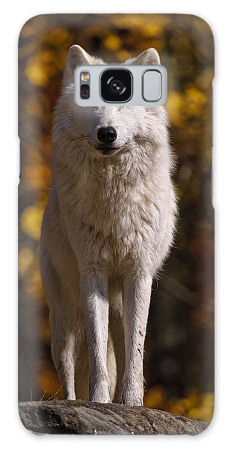 Michael Cummings Galaxy S8 Case featuring the photograph Arctic Wolf On Rocks by Michael Cummings