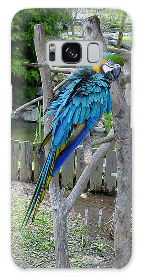 Blue Galaxy S8 Case featuring the photograph Arent I A Handsome Fellow - Blue And Gold Macaw by Suzanne Gaff