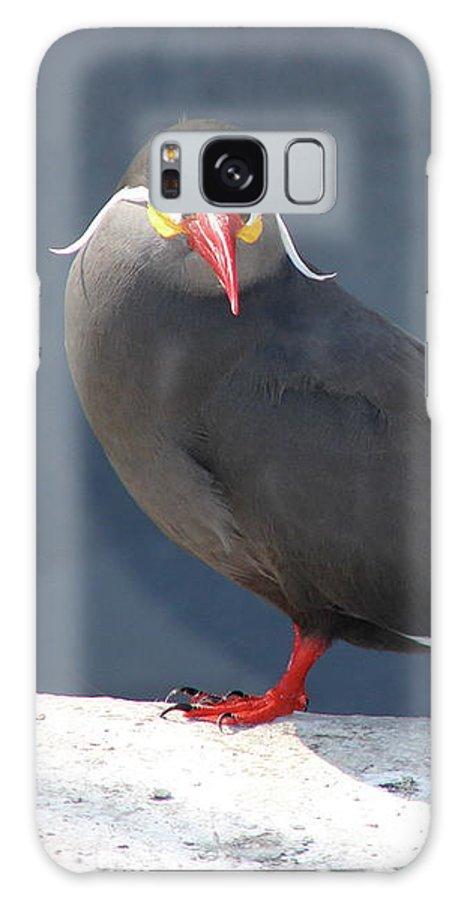 Arica Galaxy S8 Case featuring the photograph Arica Chile Sea Bird by Brett Winn