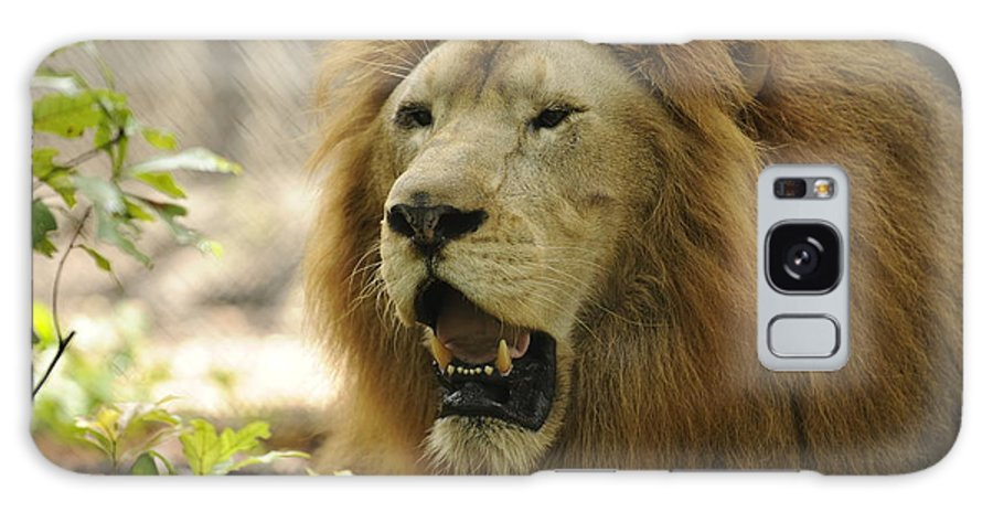 Lion Galaxy S8 Case featuring the photograph Aries by Keith Lovejoy