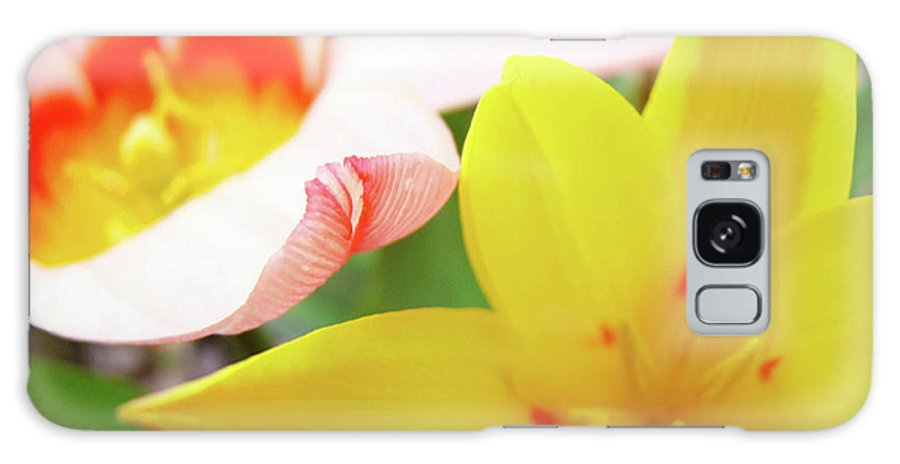 Tulip Galaxy S8 Case featuring the photograph Art Prints Pink Tulip Yellow Tulips Giclee Prints Baslee Troutman by Baslee Troutman