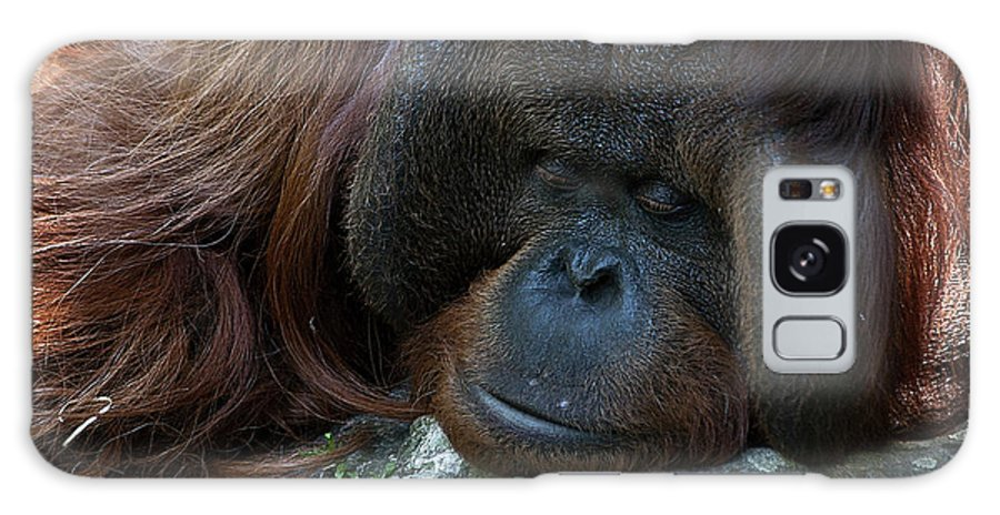 Orang Untang Galaxy S8 Case featuring the photograph Asleep by Heiko Koehrer-Wagner
