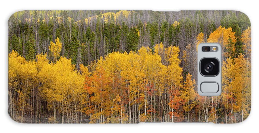 Aspens Galaxy S8 Case featuring the photograph Aspen Grove by Timothy Johnson