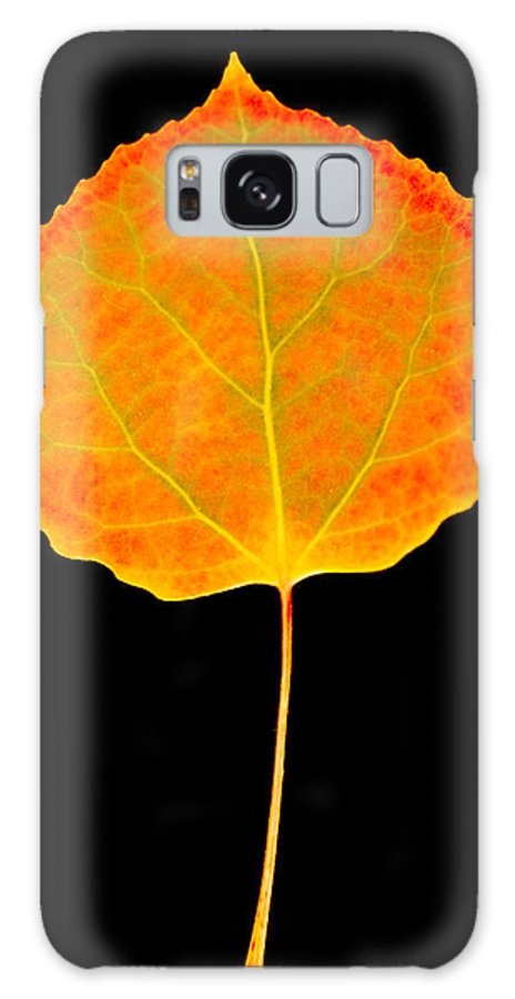 Leaf Galaxy S8 Case featuring the photograph Aspen Leaf by Marilyn Hunt