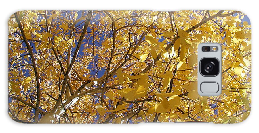 Galaxy S8 Case featuring the photograph Aspen Leaves by Chandelle Hazen