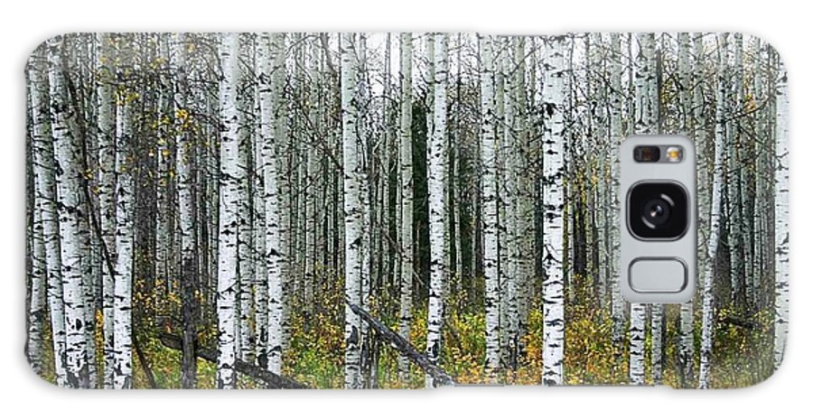 Aspens Galaxy S8 Case featuring the photograph Aspens by Nelson Strong