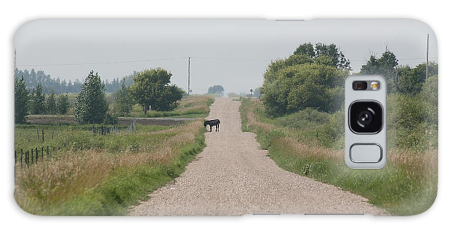 Jack Ass Donkey Road Trees Farm Ranch Mule Grass Prairie Saskatchewan Galaxy S8 Case featuring the photograph Ass Next Door by Andrea Lawrence