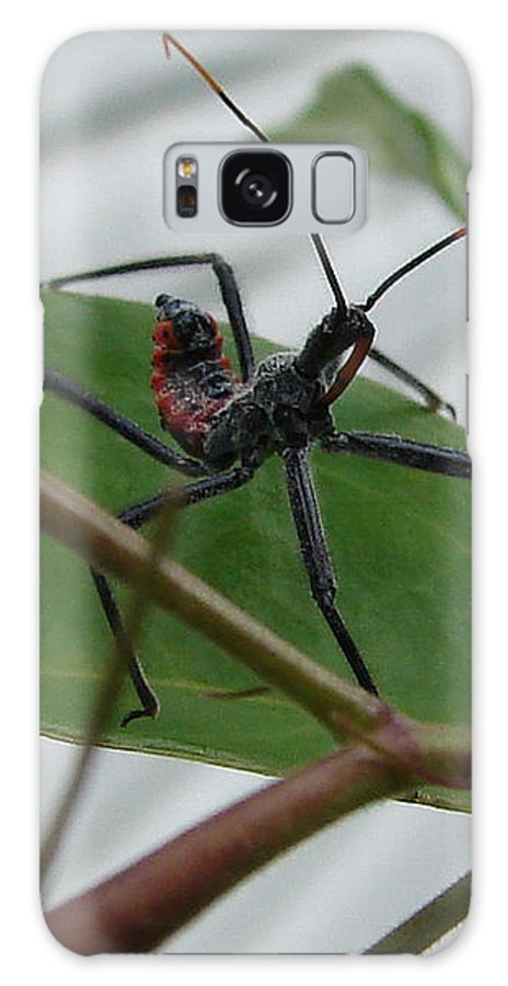 Insect Red Black Green Leaf Galaxy S8 Case featuring the photograph Assassin Bug by Luciana Seymour
