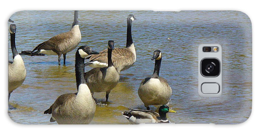 Geese Galaxy S8 Case featuring the photograph At Home In A Crowd by Peggy King