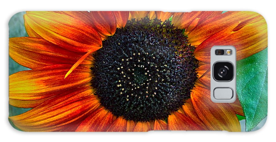 Sunflower Galaxy S8 Case featuring the photograph Autumn Blessing by Gwyn Newcombe