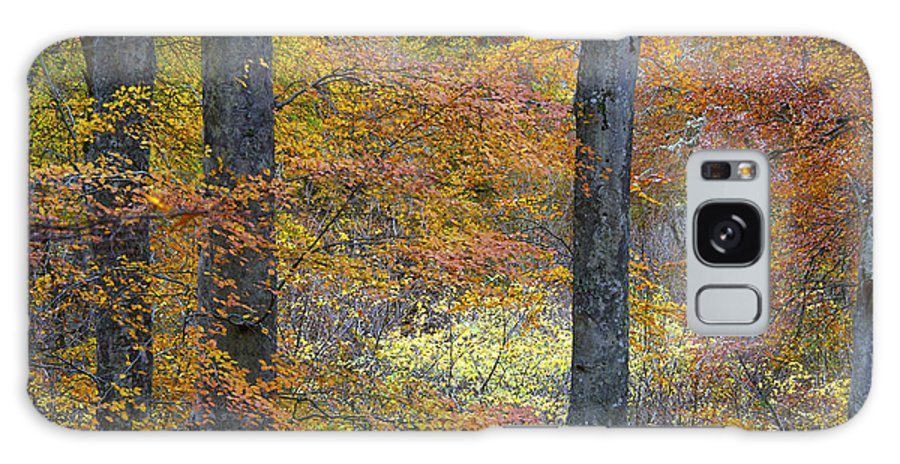Fall Galaxy S8 Case featuring the photograph Autumn Colours by Phil Crean