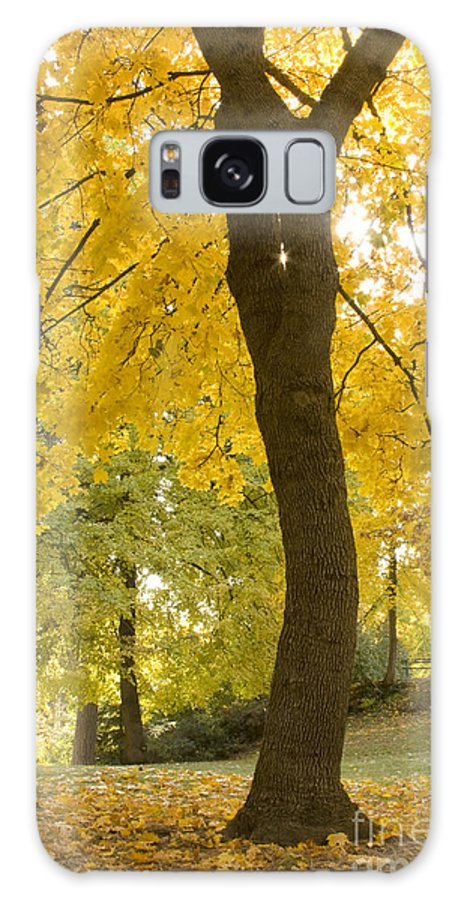 Tree Galaxy Case featuring the photograph Autumn Dance by Idaho Scenic Images Linda Lantzy