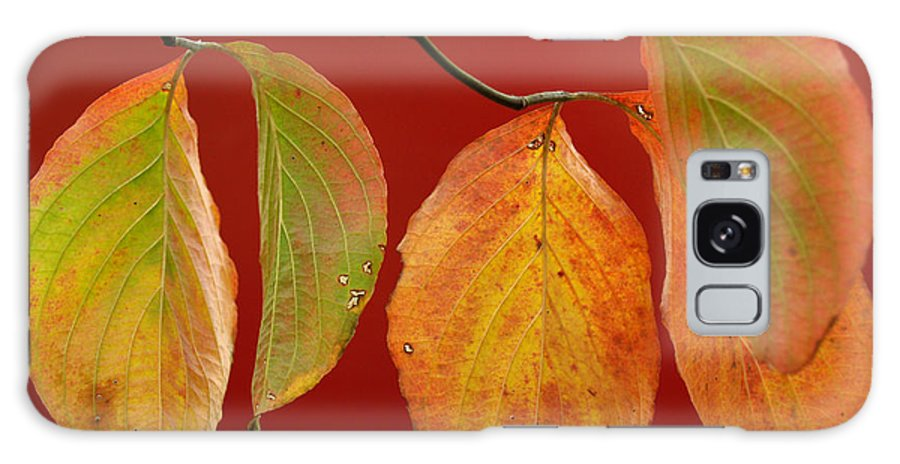 Leaf Galaxy Case featuring the photograph Autumn Dogwood Leaves On Red by Anna Lisa Yoder